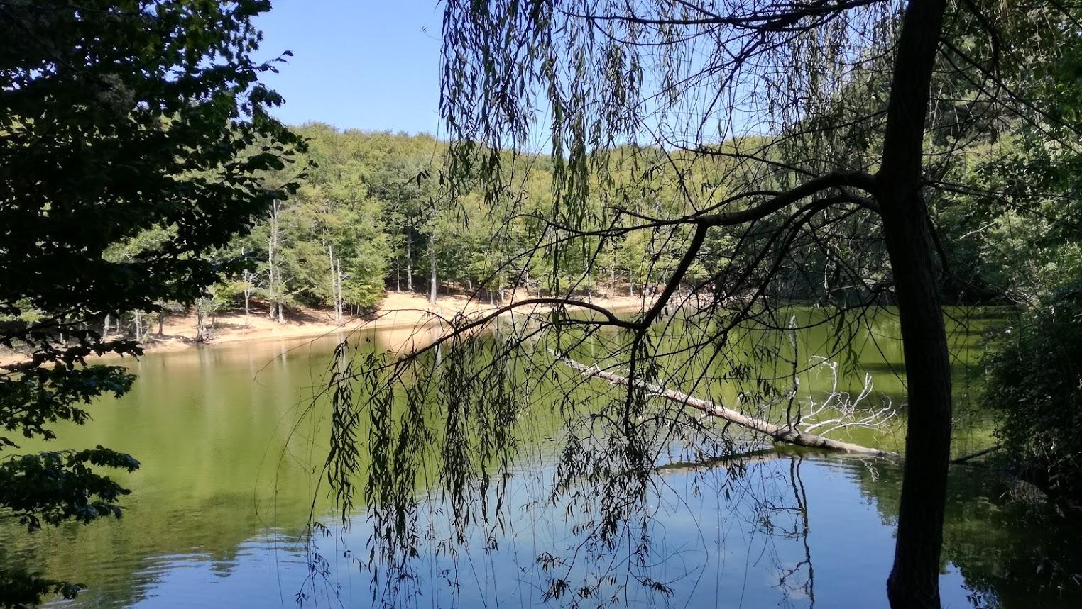 La foresta umbra for Cabine della foresta lacustre
