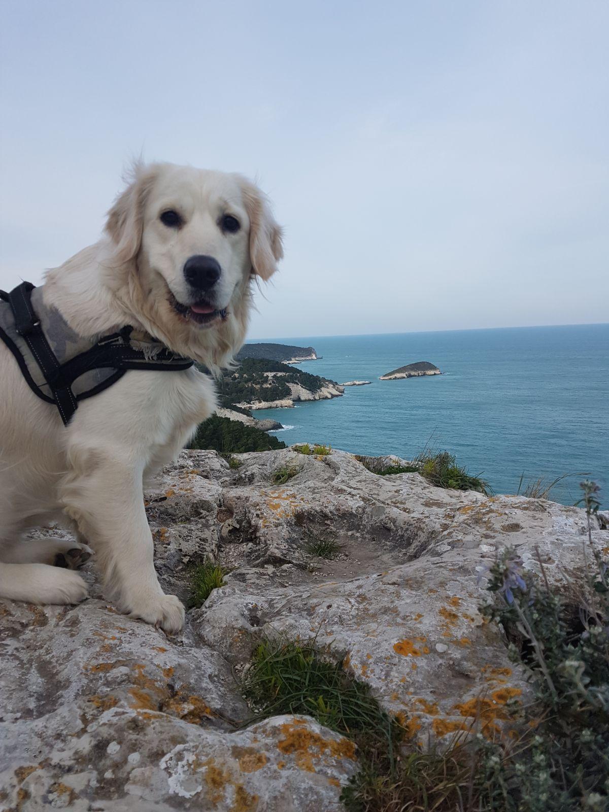 cane che guarda la costa del gargano