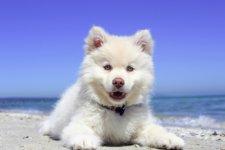 cane al mare in vacanza